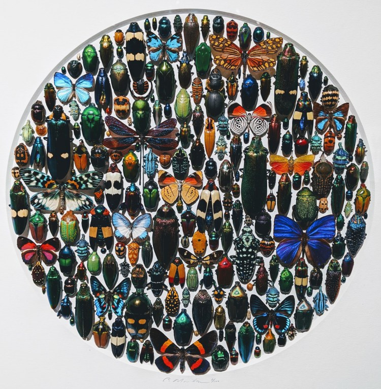 Exquisite-Creatures-Christopher-Marley-8
